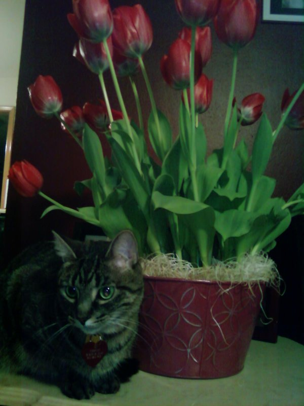 Shimi guards the flowers